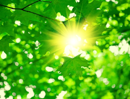 green foliage with sun photo