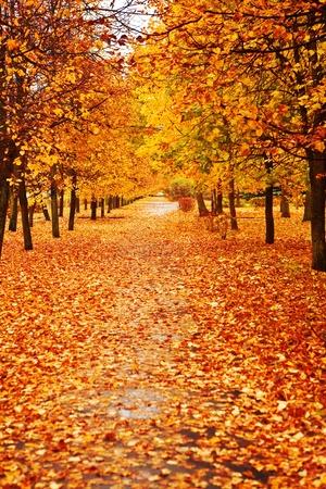 copse: orange autumn alley Stock Photo