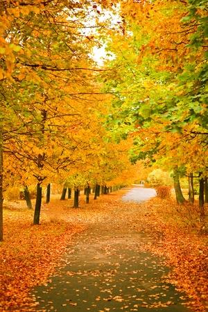 オレンジ色の紅葉公園 写真素材