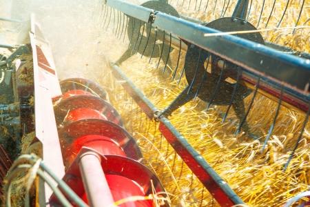 threshing: very close up combine harvesting wheat Stock Photo