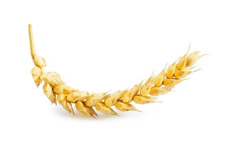 beardless: ear of wheat isolated Stock Photo