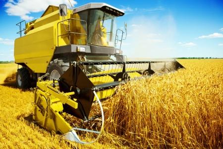 een gele harvester op het werk