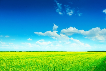 non cultivated: view on green field at summer Stock Photo