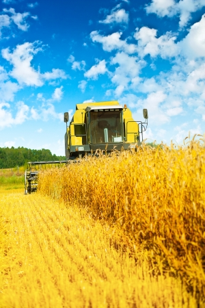 threshing: combine harvester in work