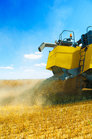 threshing: view on grinding of wheat at harvest
