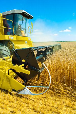 threshing: an yellow  combine harvester in work on wheat field Stock Photo