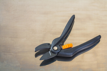 Single black secateurs photo