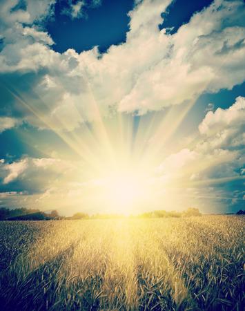 sunrise on the sumerly wheat field instagram stile photo