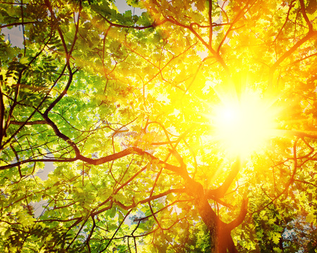 branches and leaves: translucent sun through branches of oak tree instagram stile Stock Photo