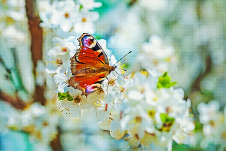 stile: butterfly on flovers of blossoming cherry tree instagram stile