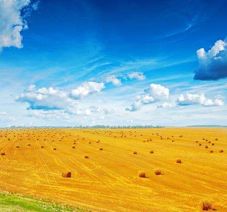 ver en cosechado campo de trigo con muchos fardos de paja y hermoso cielo azul