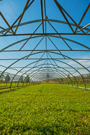 non cultivated: close up view on big empty opened greenhouse for young trees agr Stock Photo