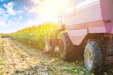 cosechadora: cosechadora en proceso de cosecha de ma�z de ma�z muy cerca