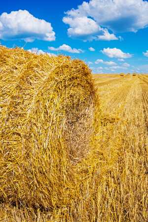 agri: very close up view single bale of straw on harvesting field agri Stock Photo