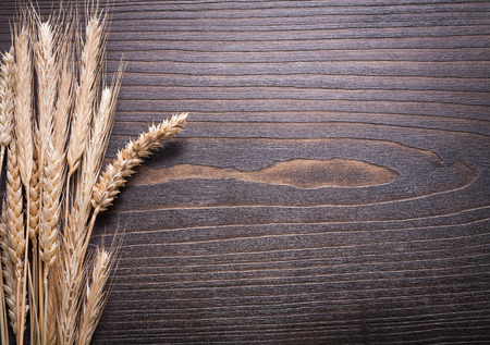 wheat: Copy space image of wheat rye ears on wooden background food and drink concept.