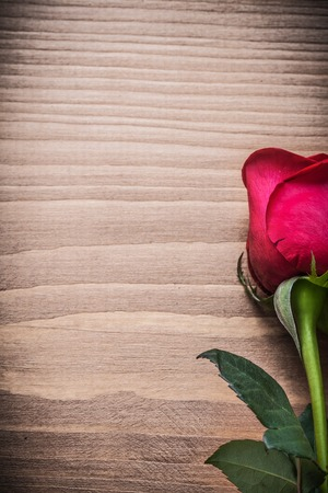 expanded: Expanded rose with green leaves on wooden board holiday concept.
