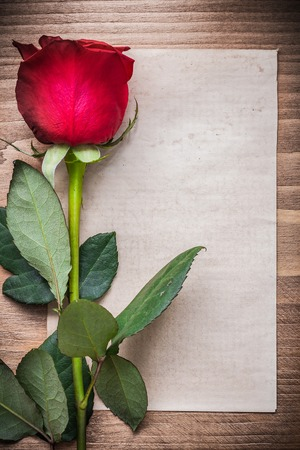 flower petals: Clean sheet of paper with bloomed rose holiday concept.