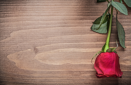 expanded: Natural aromatic rose on wooden board holiday concept. Stock Photo