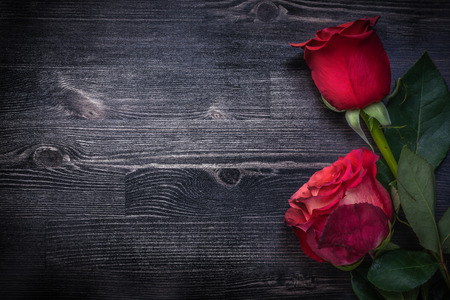 expanded: Expanded natural bloomed roses on wooden background holidays concept. Stock Photo