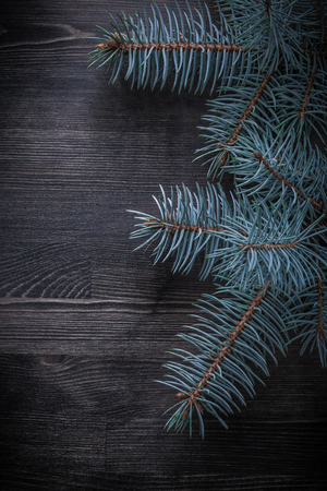 evergreen tree: Evergreen tree on wooden board holiday concept. Stock Photo