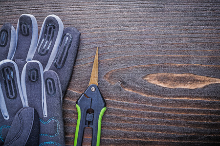 clippers: Working protective gloves clippers horizontal image gardening concept.