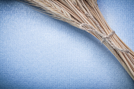 corded: Stack of corded wheat-rye ears on blue background.