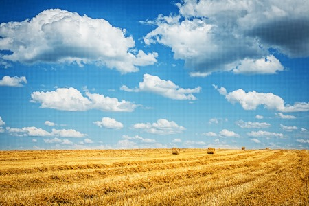 harvested field of wheat with cloudy sky.