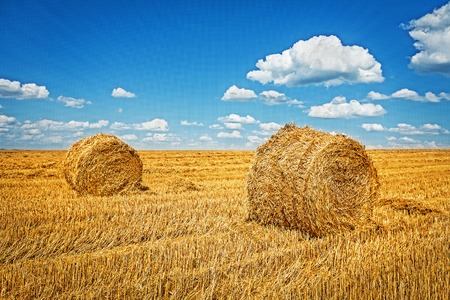 harvested: two bales of wheat straw on harvested field.