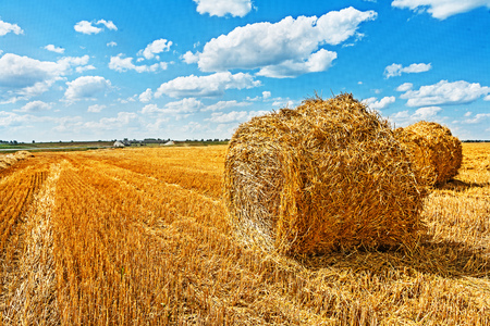 bales of straw on filed after harvesting.