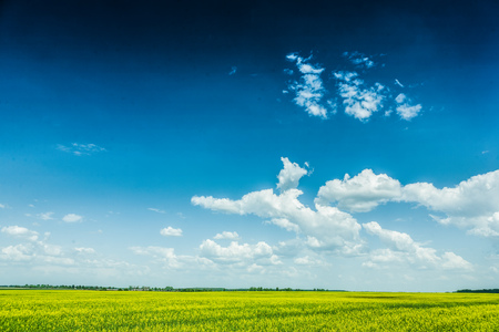 view on cloudy sky and yellow field sunny day. Stock Photo