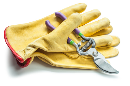 secateurs and yellow leather gloves  isolated on white