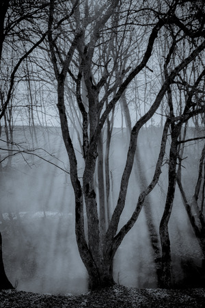 haunting: Haunting forest with will