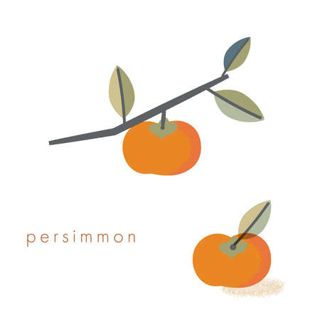 It is an illustration of the persimmon. Vector image.  イラスト・ベクター素材