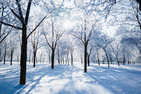 冬の木は霜の冬の枝で覆われています