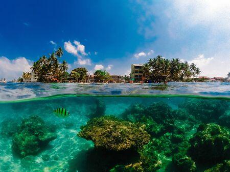Photographie sous-marine avec un dôme spécial pour gopro