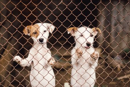 Funny puppies in cage in animal shelter