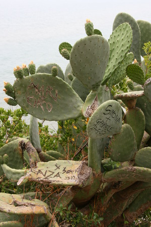 memorable: Memorable names left by tourists on cactus