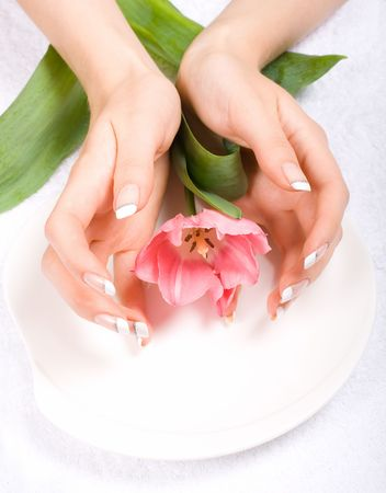 Fresh tulip on a plate with female hands around photo