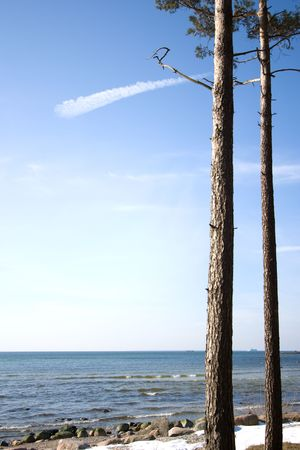 pinetree: Geomerically standing pinetrees at cost of the Baltic Sea