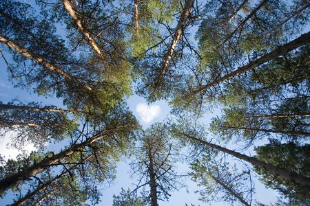 Wild trees forming shape of a heart on sky background photo