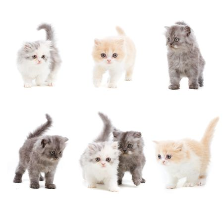 Set of different kittens on isolated white background