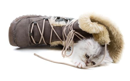 Adorable young kitten playing with winter boots photo