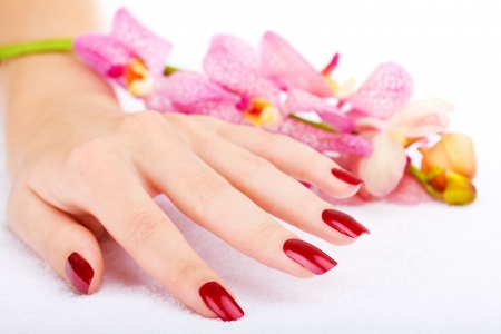 Woman hand with pink orchid Stock Photo - 3707325