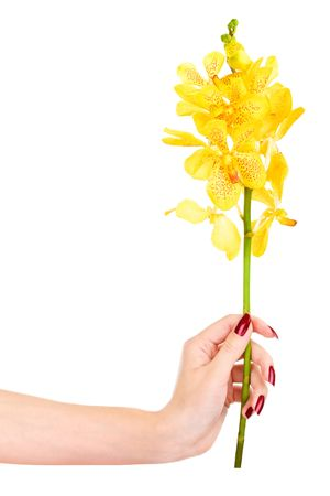 Woman hand with yellow orchid Stock Photo - 3711511