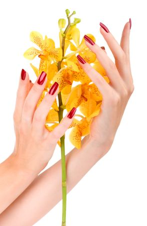 Woman hand with yellow orchid