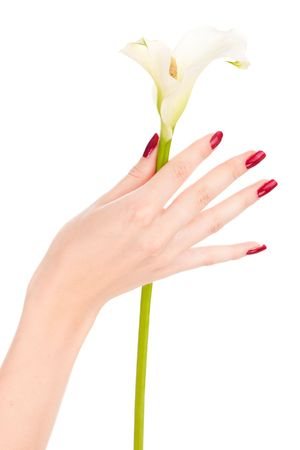 Closeup image of beautiful nails and fingers with flower over isolated white Stock Photo - 5772257