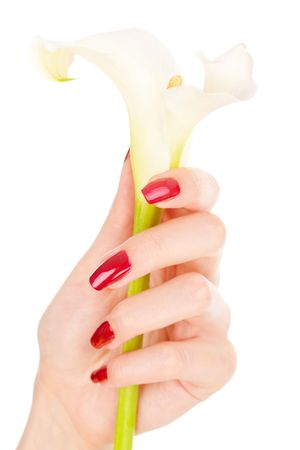 Closeup image of beautiful nails and fingers with flower over isolated white Stock Photo