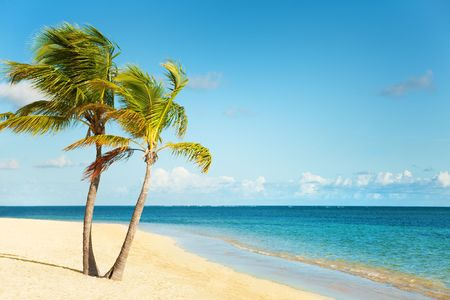 Seashore of Caribbean sea with a palm tree