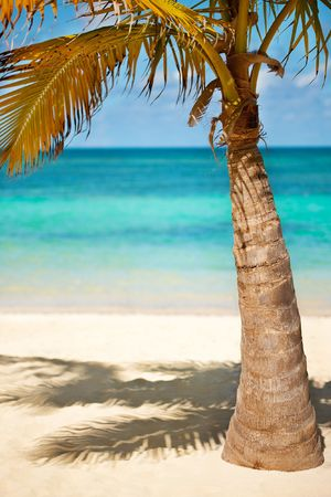 Seashore of Carribean sea with a palm tree Stock Photo - 6036305
