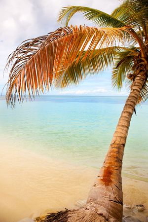 Seashore of Caribbean sea with a coconut palm tree Stock Photo - 6078612